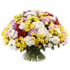 Букет 101 разноцветная хризантема
