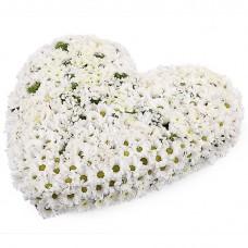 Букет сердце из белой хризантемы