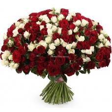 101 кустовая роза - Белая и Красная