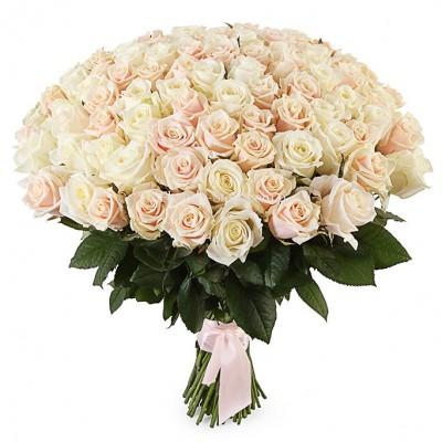 Букет 101 белая и кремовая роза - сорт Аваланч и Талея