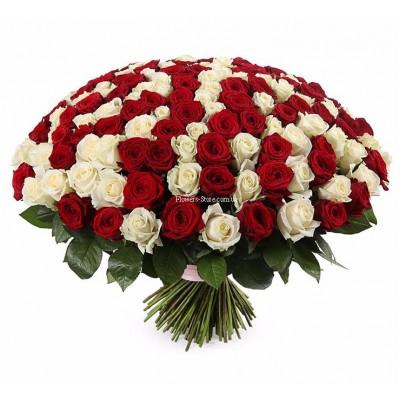 Букет из 201 розы микс - сорт Аваланч и Гран-При