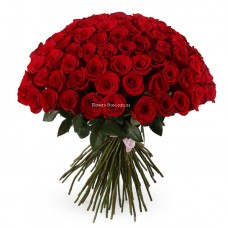 101 Красная роза Фридом