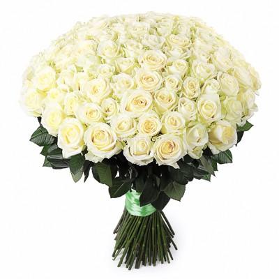 Недорогой букет: 101 Белая роза - сорт Аваланч