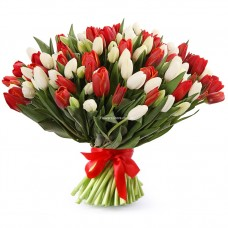 101 белый и красный тюльпан