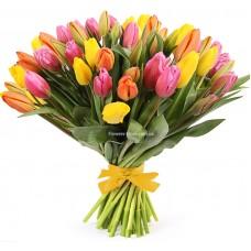 51 тюльпан - радужный микс