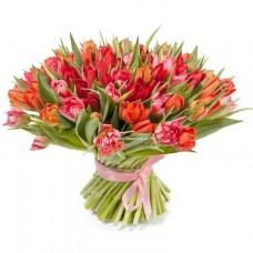 101 красно-розовый тюльпан