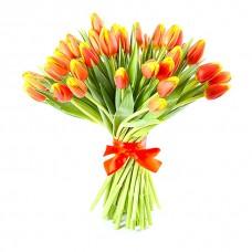 51 красно-желтый тюльпан - вера